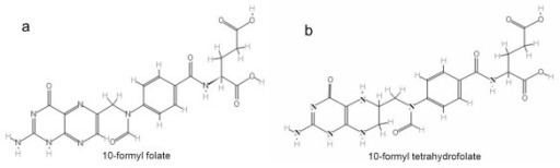 10-Formyltetrahydrofolate The structure of 10formyl folate a and 10formyl tet Openi