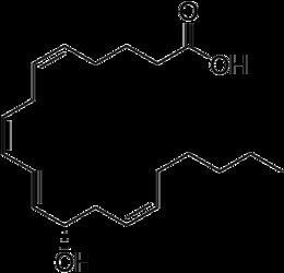 12-Hydroxyeicosatetraenoic acid httpsuploadwikimediaorgwikipediacommonsthu