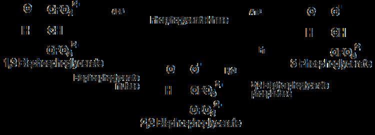1,3-Bisphosphoglyceric acid 23Bisphosphoglyceric acid Wikiwand