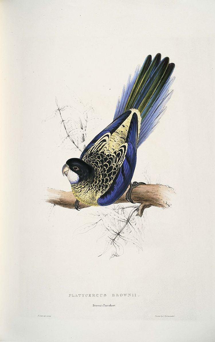 1820 in birding and ornithology