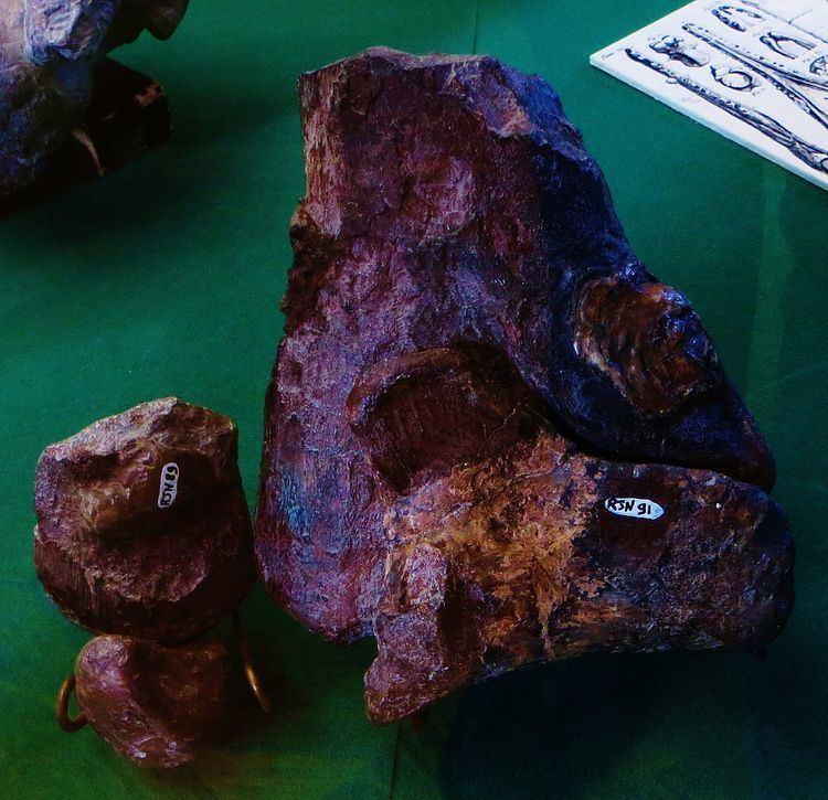 1830 in paleontology