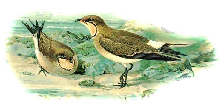 1842 in birding and ornithology