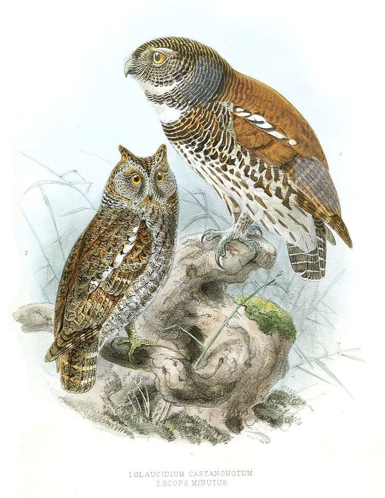 1846 in birding and ornithology