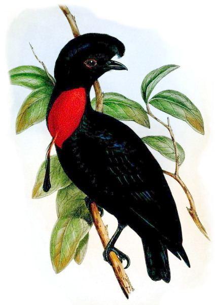 1851 in birding and ornithology