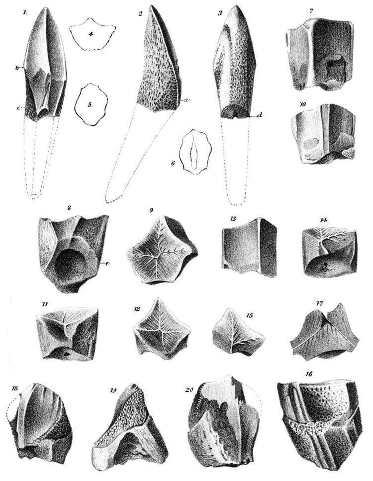 1856 in paleontology