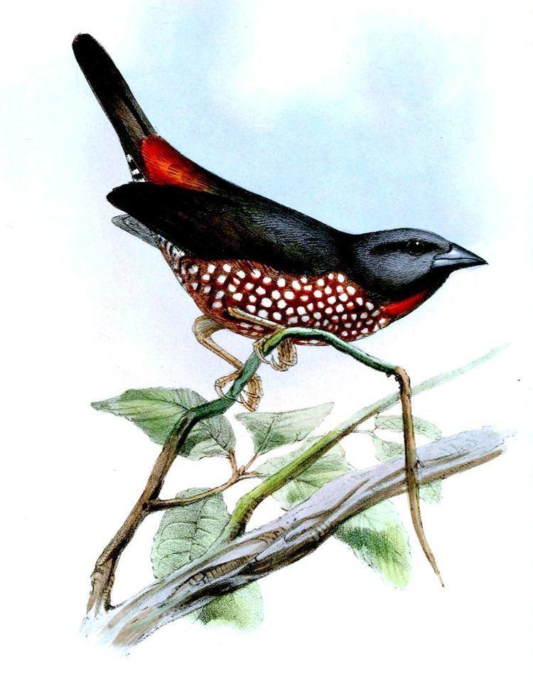 1860 in birding and ornithology