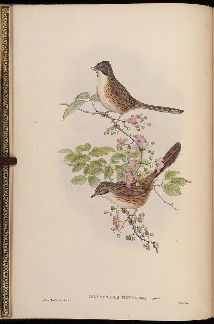 1868 in birding and ornithology