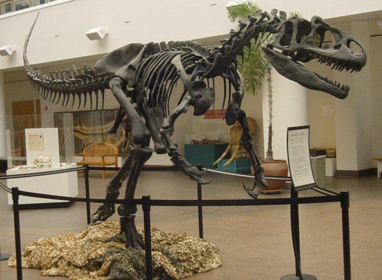1870 in paleontology