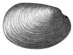 1881 in paleontology