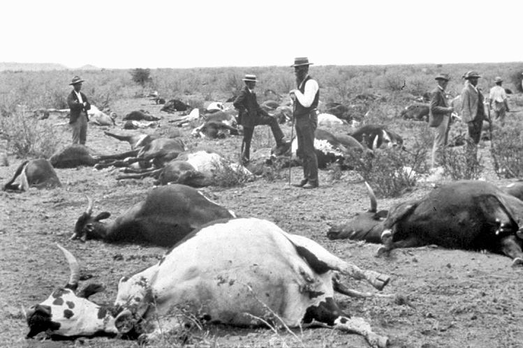 1890s African rinderpest epizootic