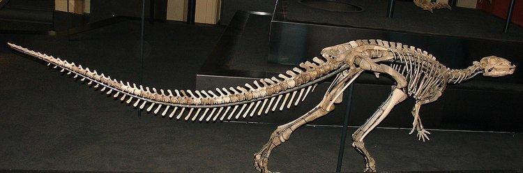 1894 in paleontology