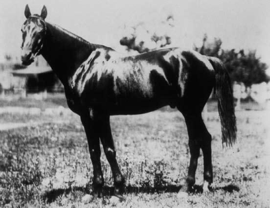 1894 Kentucky Derby
