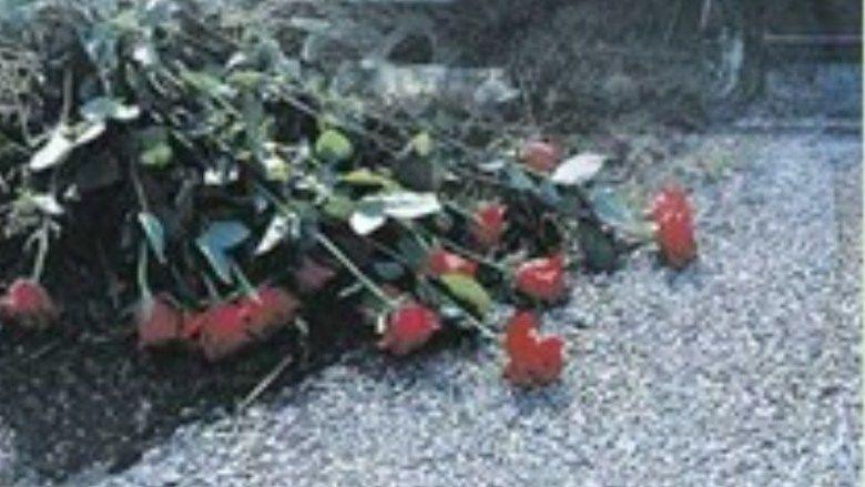 19 Red Roses movie scenes
