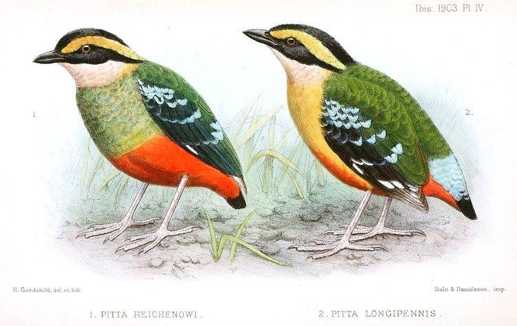1901 in birding and ornithology