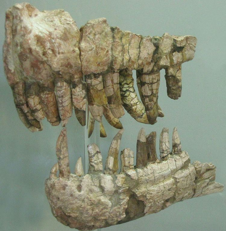 1901 in paleontology