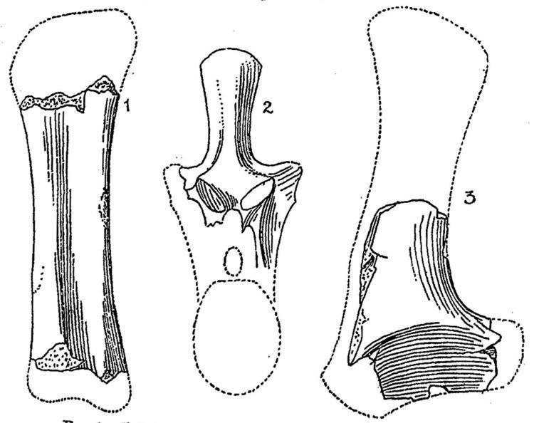 1904 in paleontology