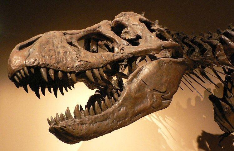 1905 in paleontology