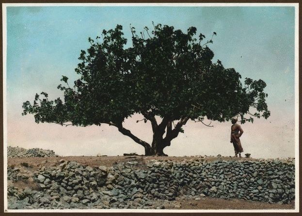 1915 Palestine locust infestation Picture a Day The Locusts of 1915 A Plague of Biblical