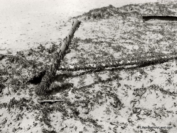 1915 Palestine locust infestation BiblePlaces Blog Picture of the Week Locust Plague of 1915