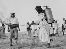 1915 Palestine locust infestation httpsuploadwikimediaorgwikipediacommonsthu