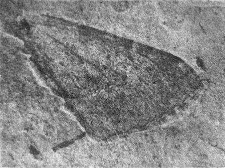 1922 in paleontology