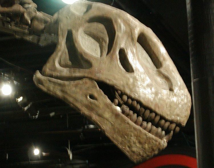 1939 in paleontology