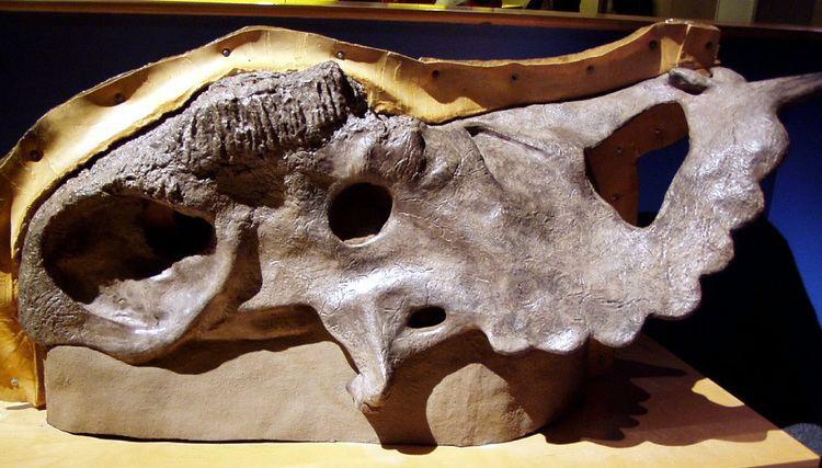 1950 in paleontology
