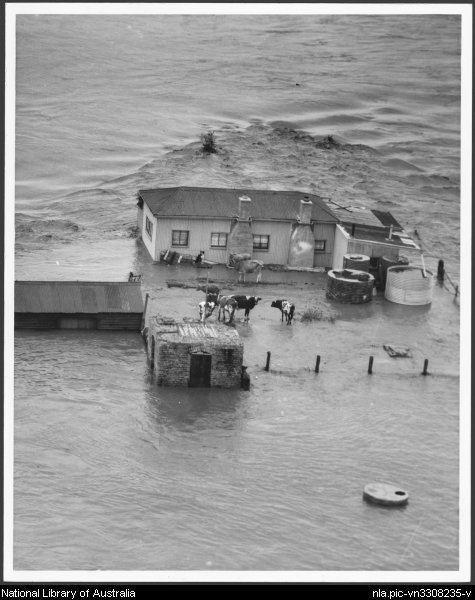 1955 Hunter Valley floods 1955 Hunter Valley floods Wikipedia