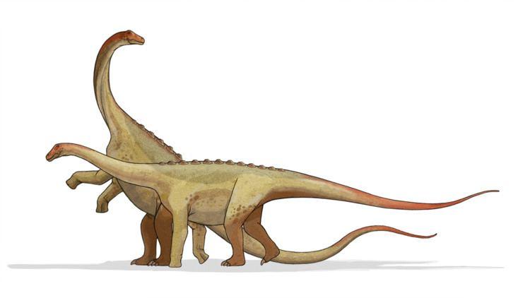 1963 in paleontology