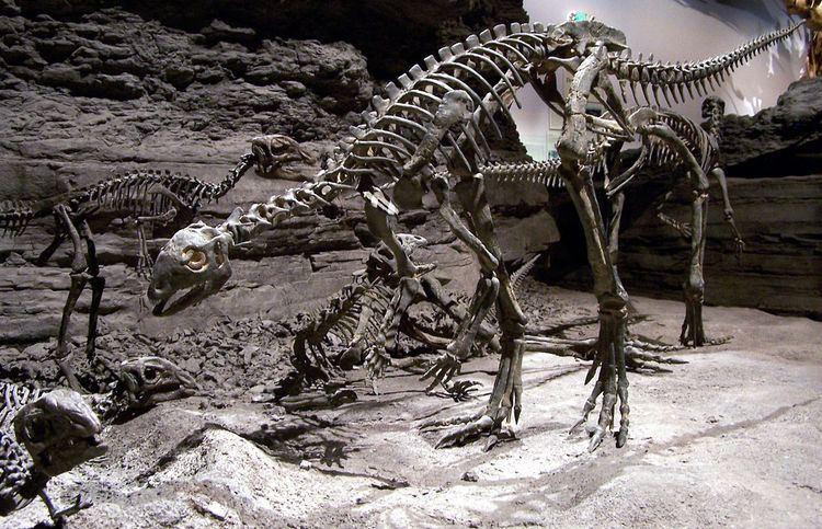 1977 in paleontology
