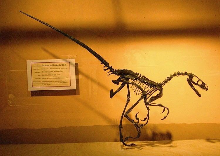 1978 in paleontology