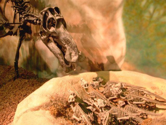1979 in paleontology