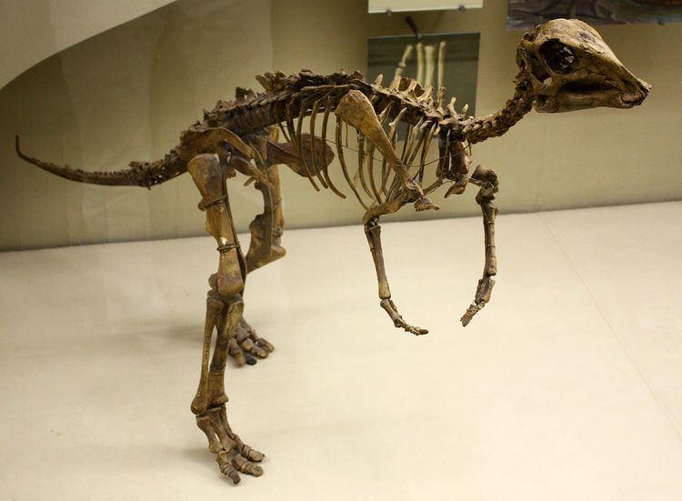 1982 in paleontology