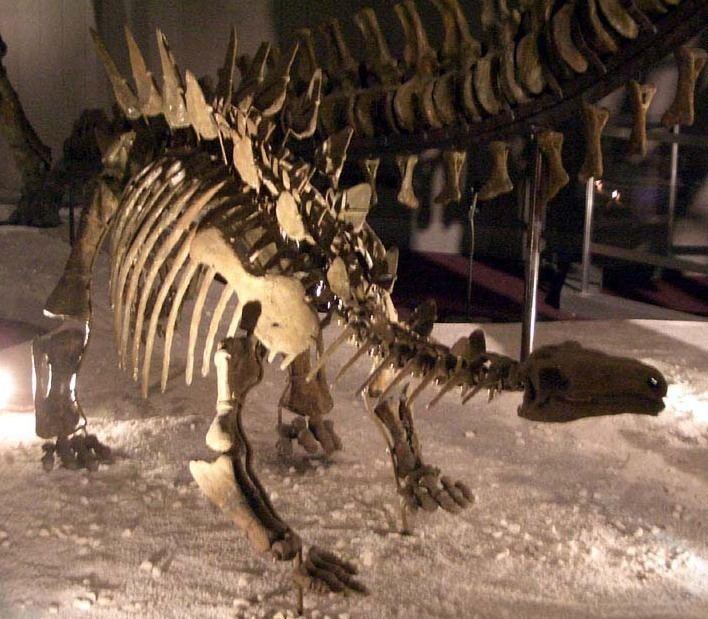 1983 in paleontology