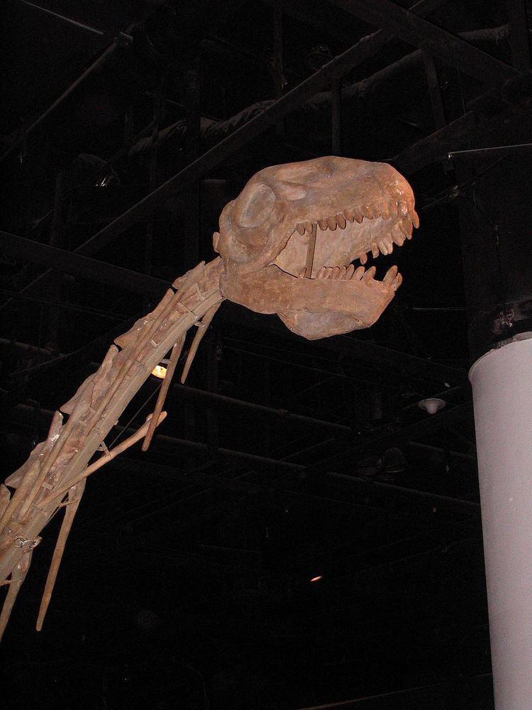 1984 in paleontology