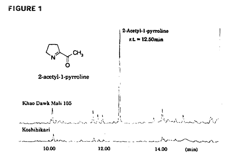 2-Acetyl-1-pyrroline Patent EP1683869A2 Nucleic acids that enhance the synthesis of 2