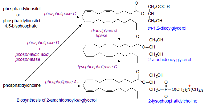 2-Arachidonoylglycerol Endocannabinoids anandamide 2arachidonoylglycerol oleamide