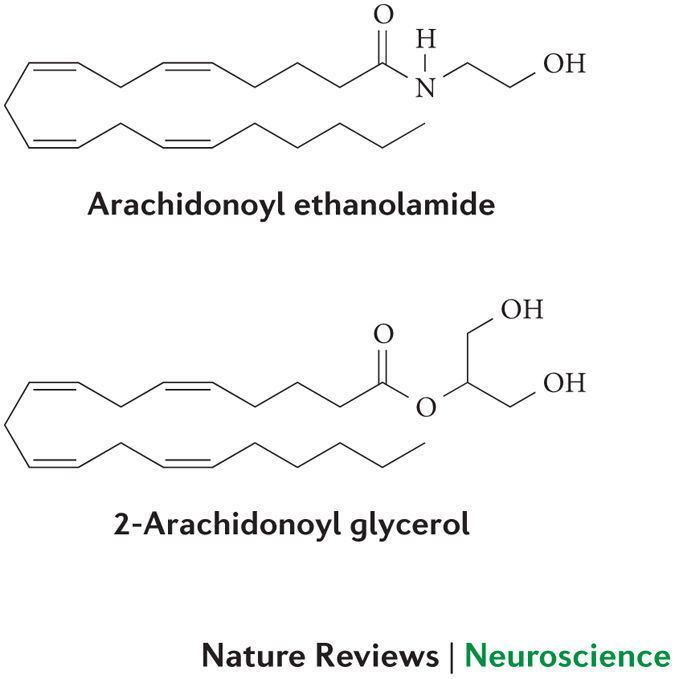 2-Arachidonoylglycerol wwwnaturecomnrnjournalv15n11imagesnrn3811