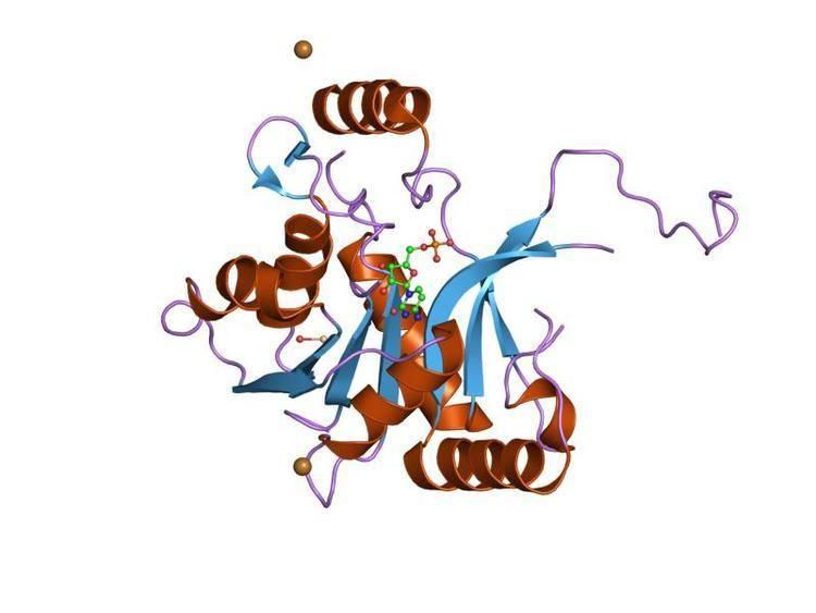 2-C-methyl-D-erythritol 4-phosphate cytidylyltransferase