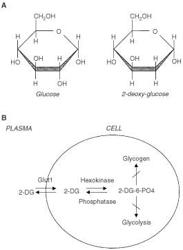 2-Deoxy-D-glucose British Journal of Cancer Evaluation of 2deoxyDglucose as a