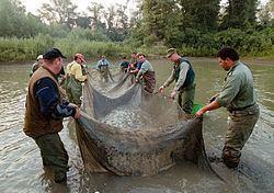 2000 Baia Mare cyanide spill 2000 Baia Mare cyanide spill Wikipedia