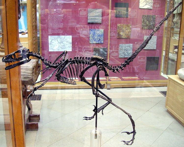 2000 in paleontology