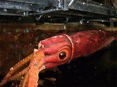 20,000 Leagues Under the Sea: Submarine Voyage httpssmediacacheak0pinimgcom236xb8ce01