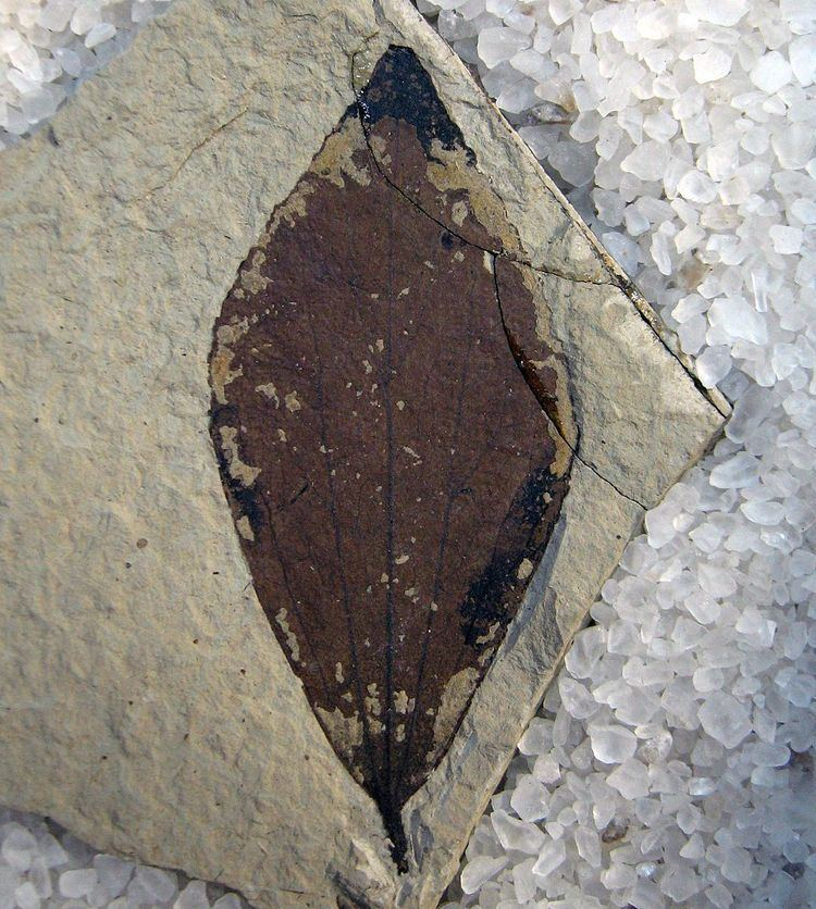 2001 in paleontology