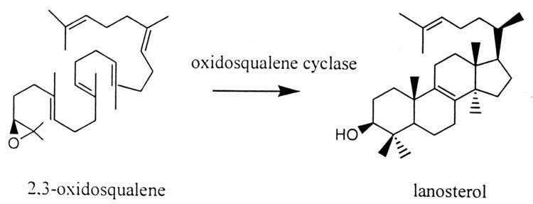 2,3-Oxidosqualene aacasmorgcontent4541210F2largejpg