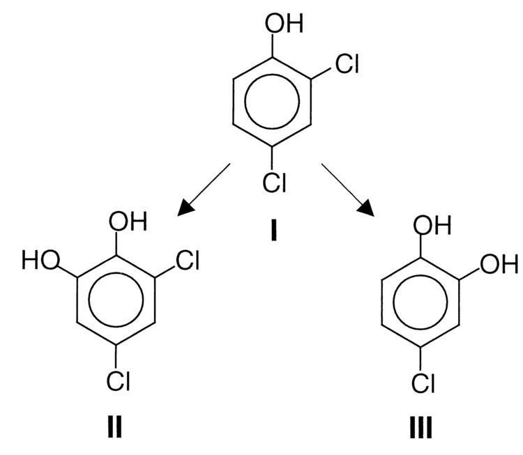 2,4-Dichlorophenol Hydroxylated Metabolites of 24Dichlorophenol Imply a FentonType