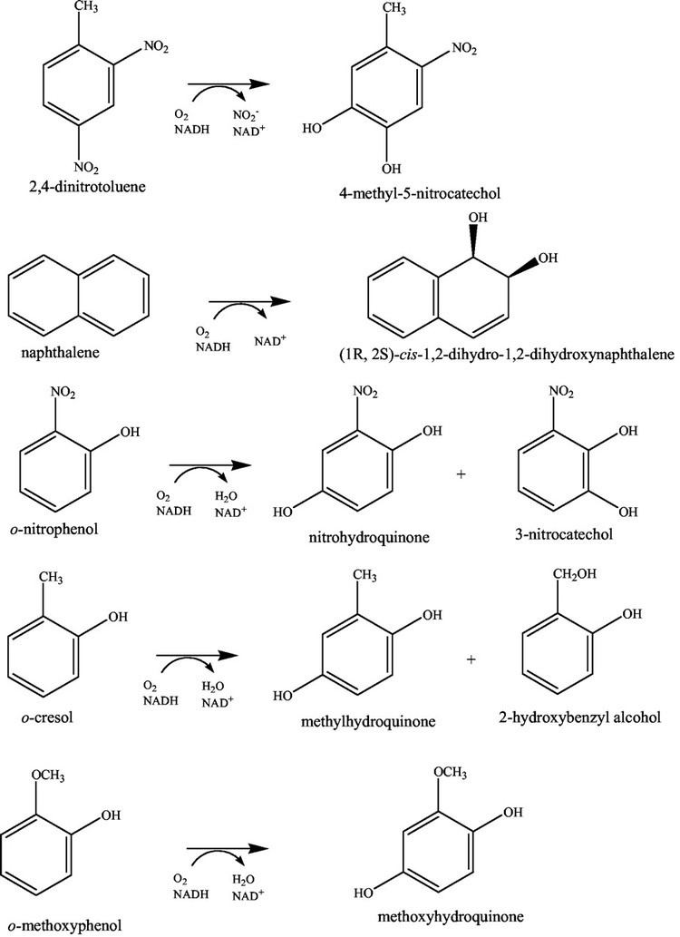 2,4-Dinitrotoluene Saturation Mutagenesis of Burkholderia cepacia R34 24