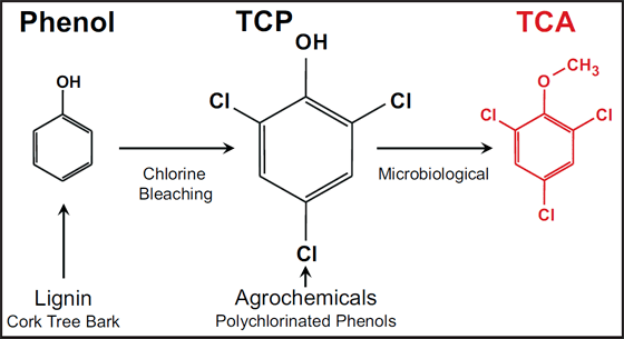 2,4,6-Trichloroanisole Cork taint in wine produced by 246trichloroanisole TCA