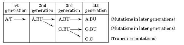5-Bromouracil 5Bromouracil Molecular Biology