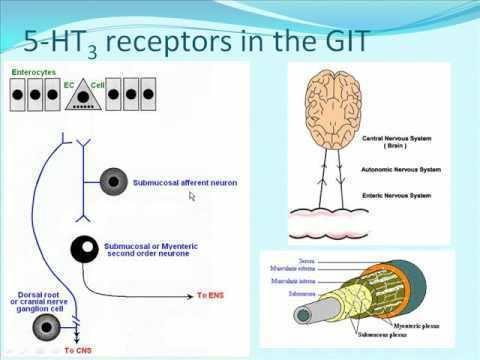 5-HT3 receptor httpsiytimgcomviVjjztToHmwhqdefaultjpg